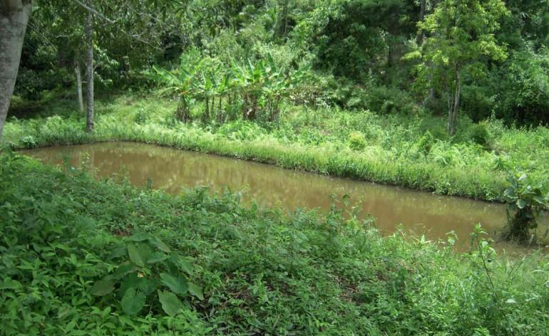 Pisciculture de la concession des Fils de la Charité, à Kasangulu, en RDC