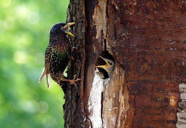oiseaux dans tronc par wal_172619 de Pixabay